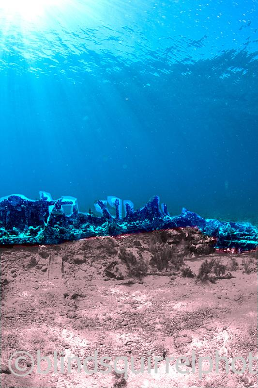 IMG_4514-1  recolored reef
